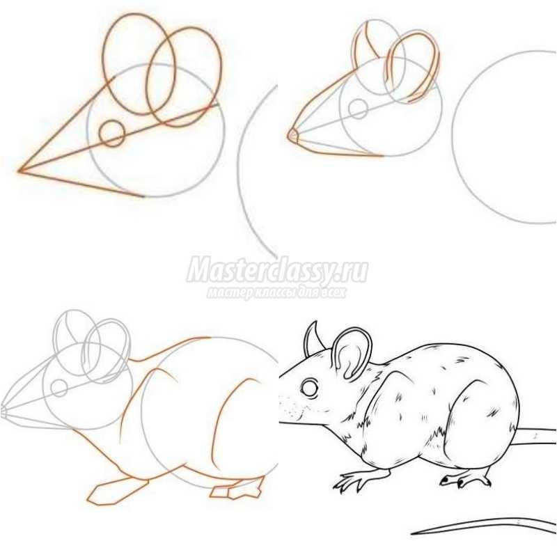 Красивые рисунки крысы для срисовки (10)
