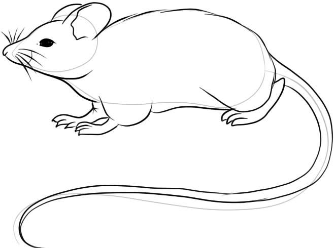 Красивые рисунки крысы для срисовки (12)