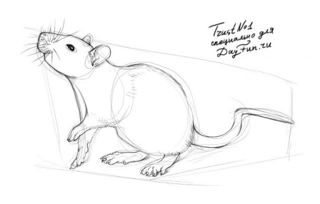Красивые рисунки крысы для срисовки (18)