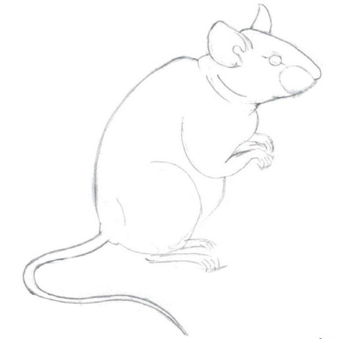 Красивые рисунки крысы для срисовки (19)