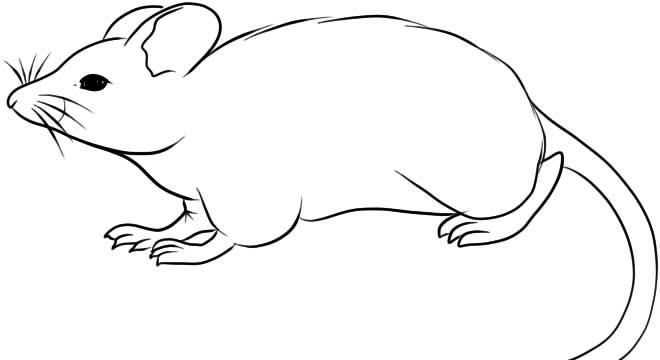 Красивые рисунки крысы для срисовки (20)