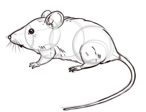 Красивые рисунки крысы для срисовки (23)