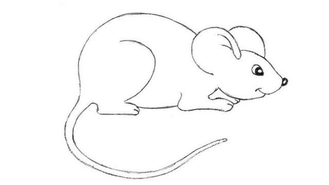 Красивые рисунки крысы для срисовки (4)