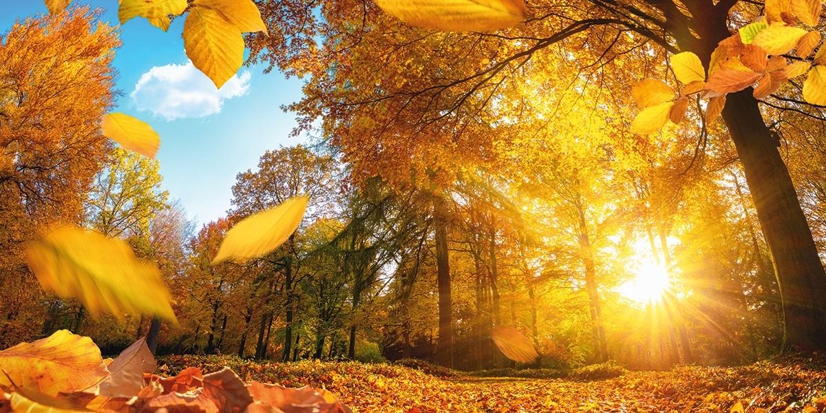Золотая осень 001