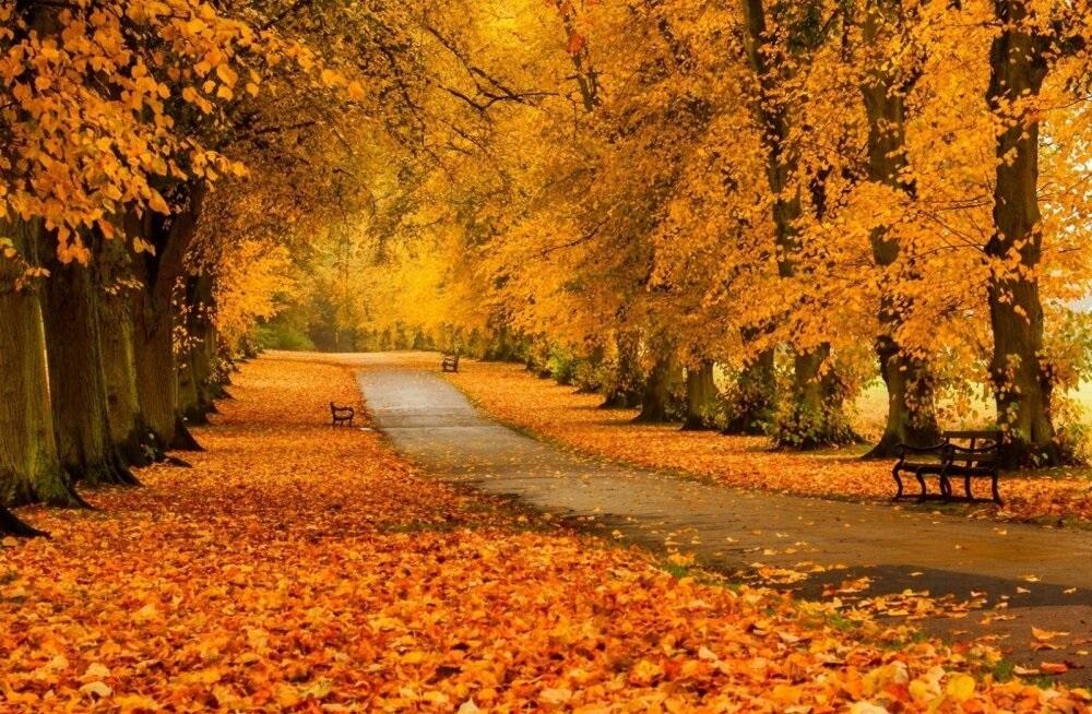 Золотая осень 029