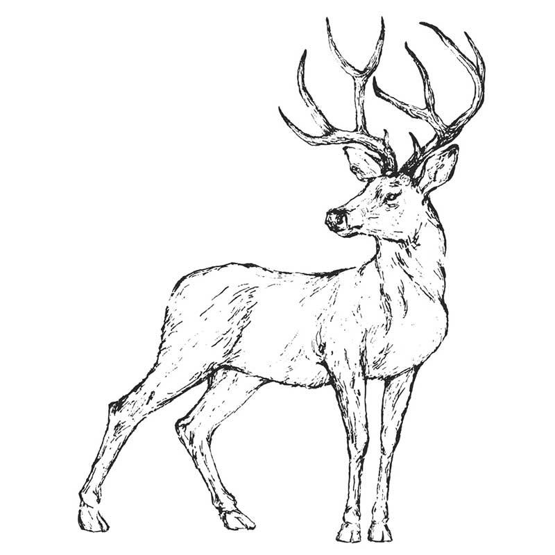 Рисунки оленя для срисовки 027