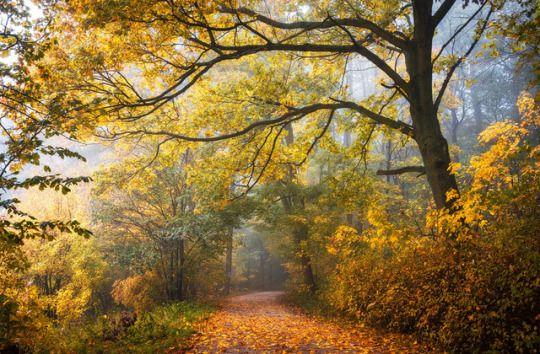 Фото рисунки осенний пейзаж (11)