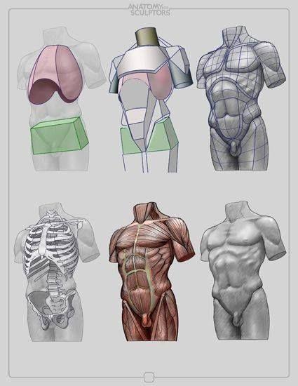 Анатомия для скульпторов и художников 001