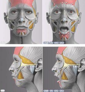 Анатомия для скульпторов и художников 027