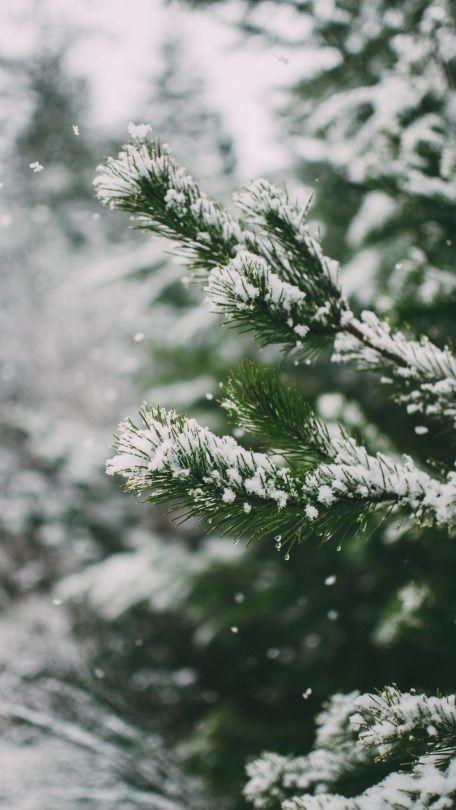 Зима и февраль лучшие обои на телефон   подборка (18)