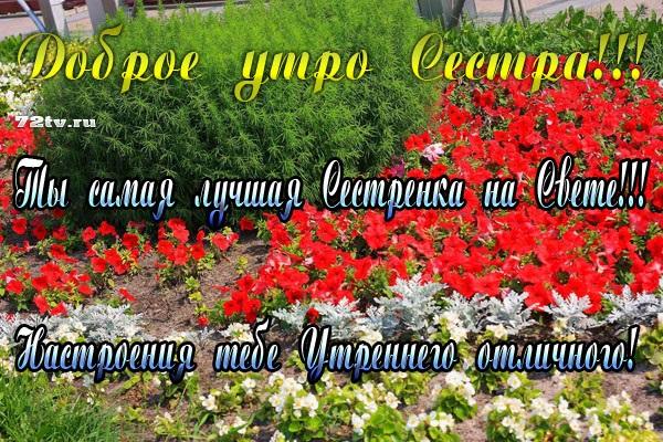 Сестра доброе утро открытки 015