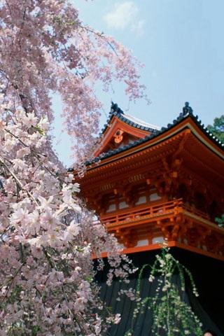 Япония обои на айфон 005