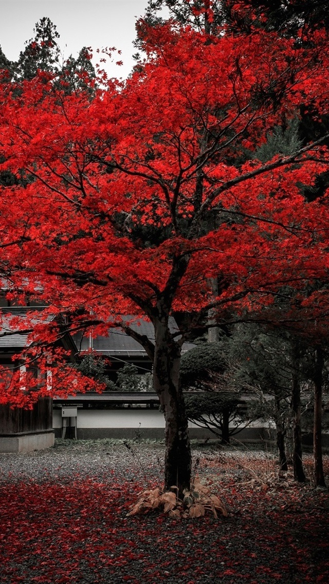 Япония обои на айфон 008