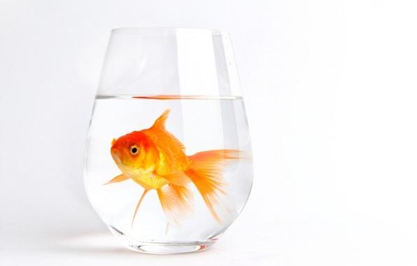 Рыбка картинка на шкафчик 011