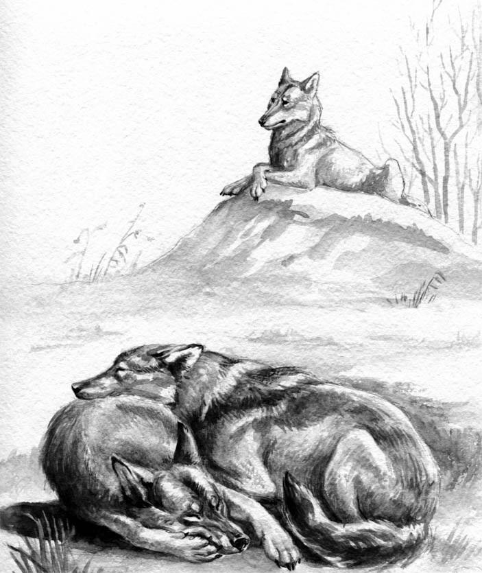 Картинки волка маслом для детей 005