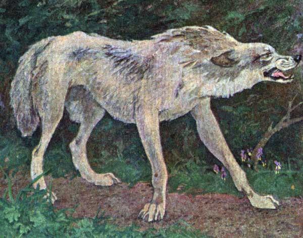 Картинки волка маслом для детей 007