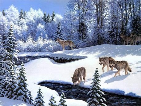 Картинки волка маслом для детей 010