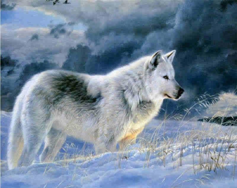 Картинки волка маслом для детей 013