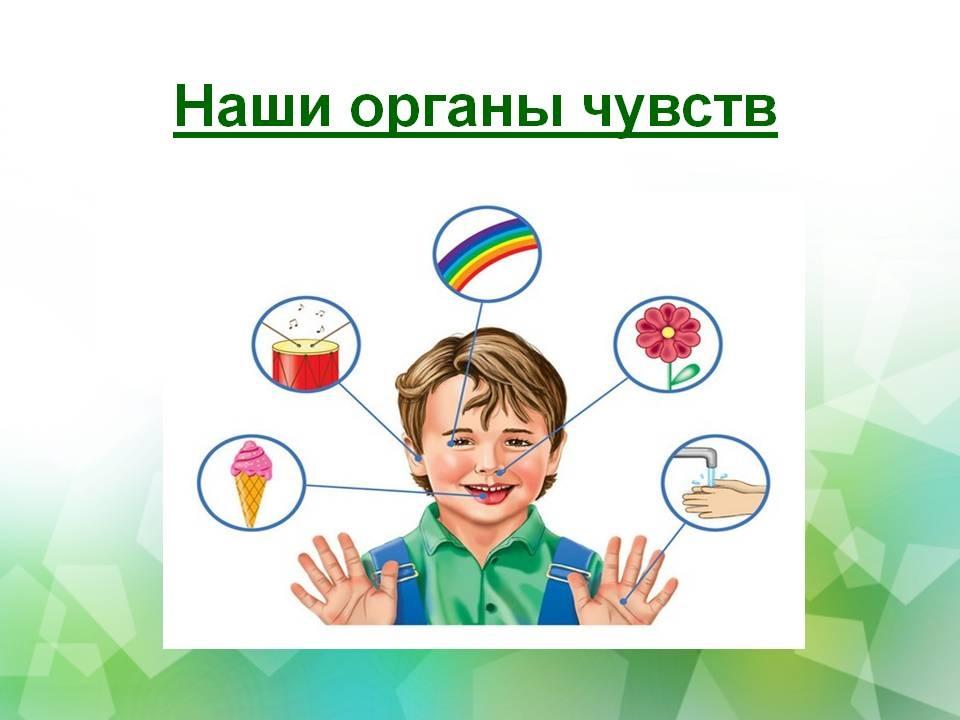 Картинки органов чувств человека для детей 025