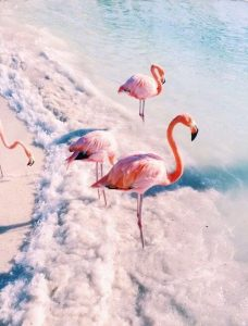 Красивые картинки фламинго на телефон 023