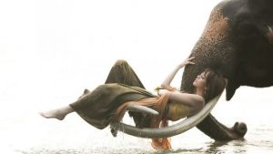 Красивые фото девушка на хоботе слона 017
