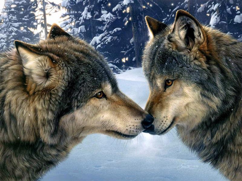 Крутые арты стая волков 016