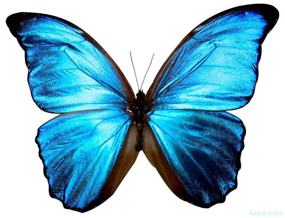 Милые картинки бабочки из перьев 001