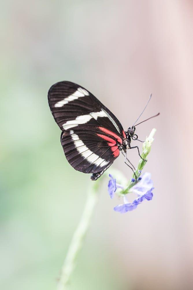 Милые картинки бабочки из перьев 005
