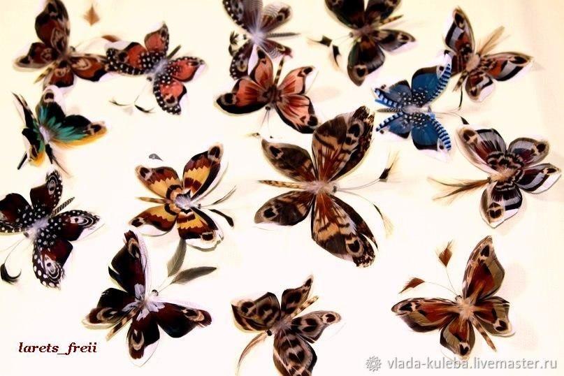 Милые картинки бабочки из перьев 011