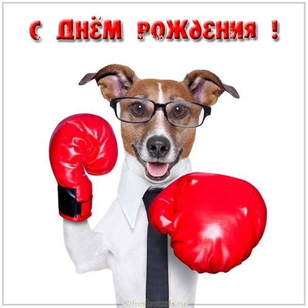 Открытки боксера с днём рождения 001
