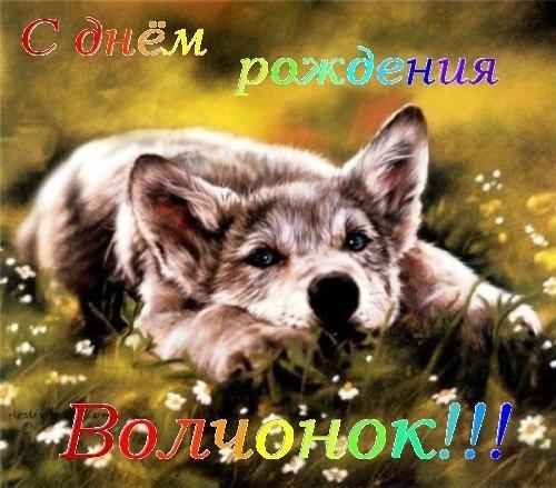Открытки с волком на день рождение 005