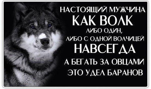 Открытки с волком на день рождение 008