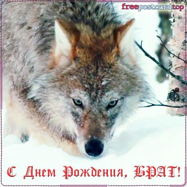 Открытки с волком на день рождение 013