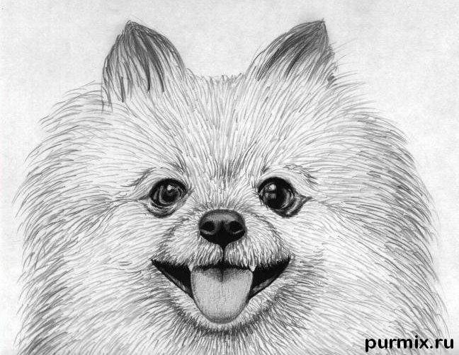 Забавные рисунки собак 005
