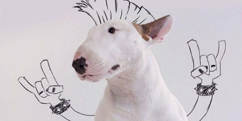 Забавные рисунки собак 006