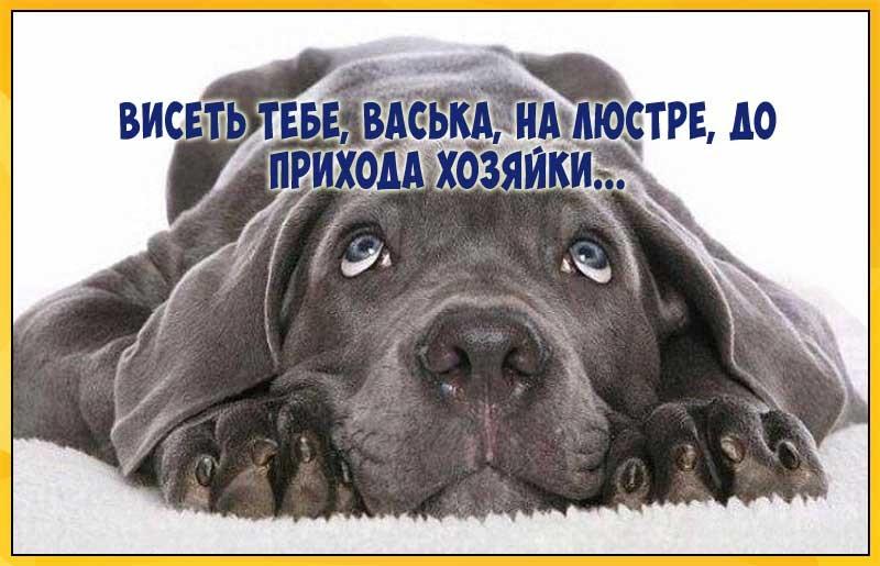 Забавные рисунки собак 013