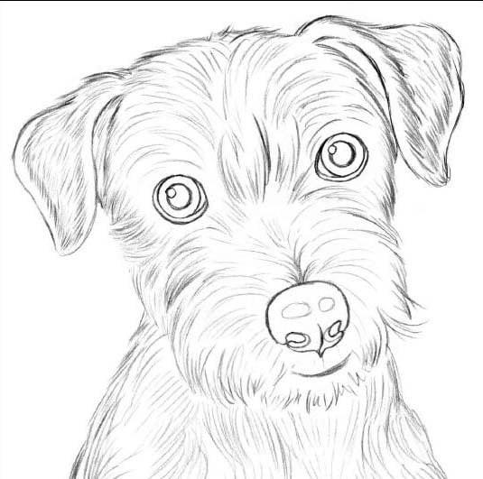 Забавные рисунки собак 018