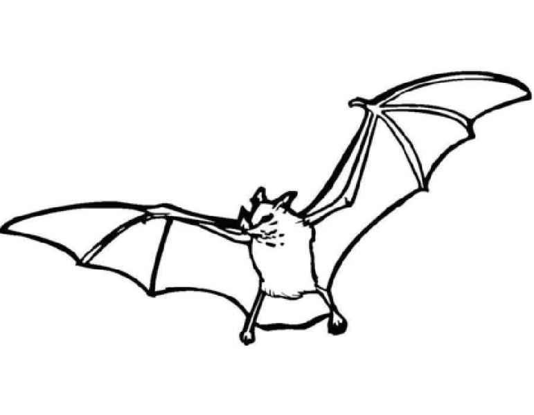 Кавайные зверюшки рисунки для детей 008