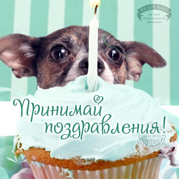 Милые открытки с животными с днем рождения женщине 011