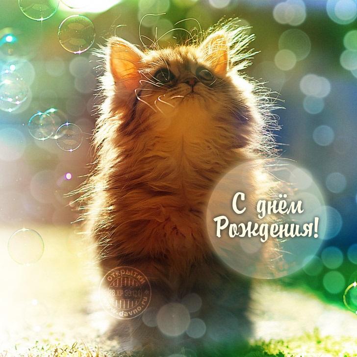 Милые открытки с животными с днем рождения женщине 013