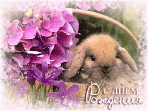 Милые открытки с животными с днем рождения женщине 015