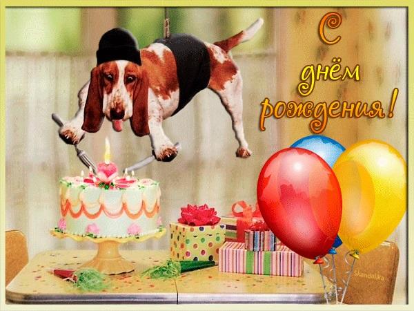 Милые открытки с животными с днем рождения женщине 016