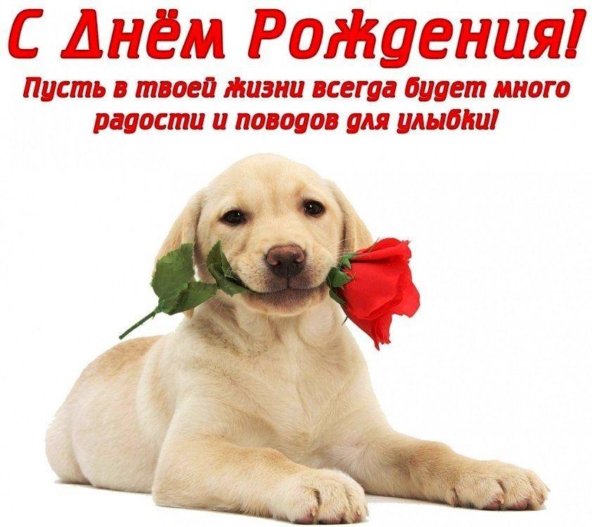 Милые открытки с животными с днем рождения женщине 025