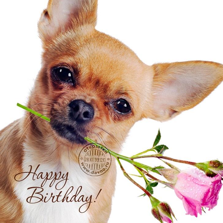 Милые открытки с животными с днем рождения женщине 027