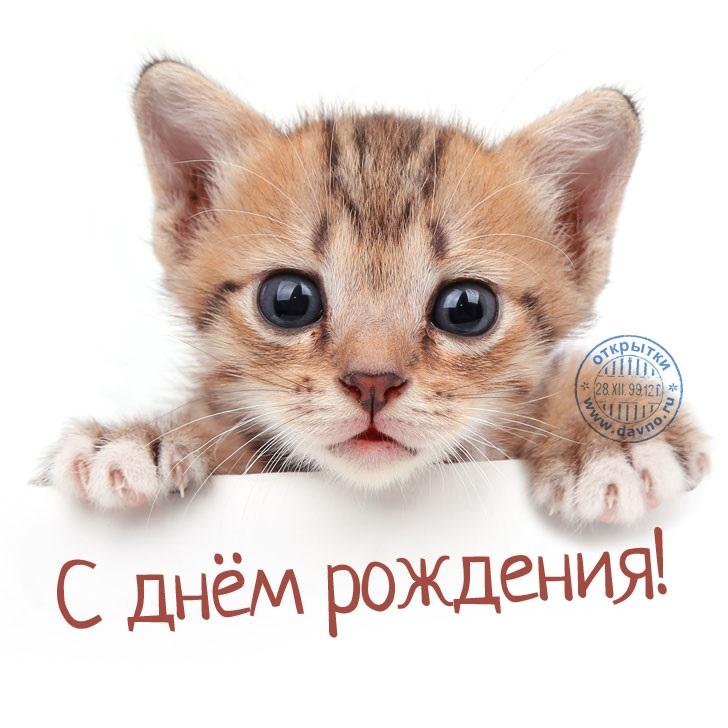 Милые открытки с животными с днем рождения женщине 028