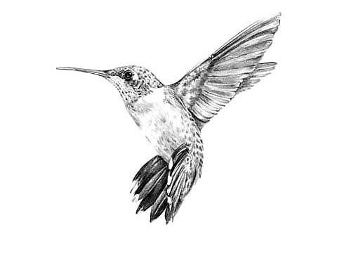 Эскизы тату маленькие птицы 014
