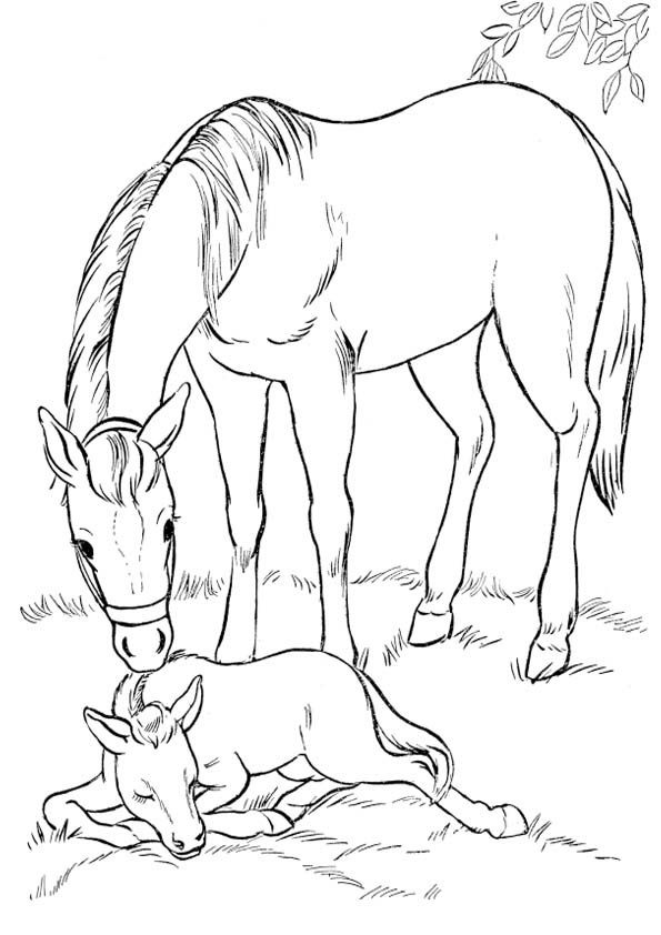 Рисунки лошадей для раскраски 008