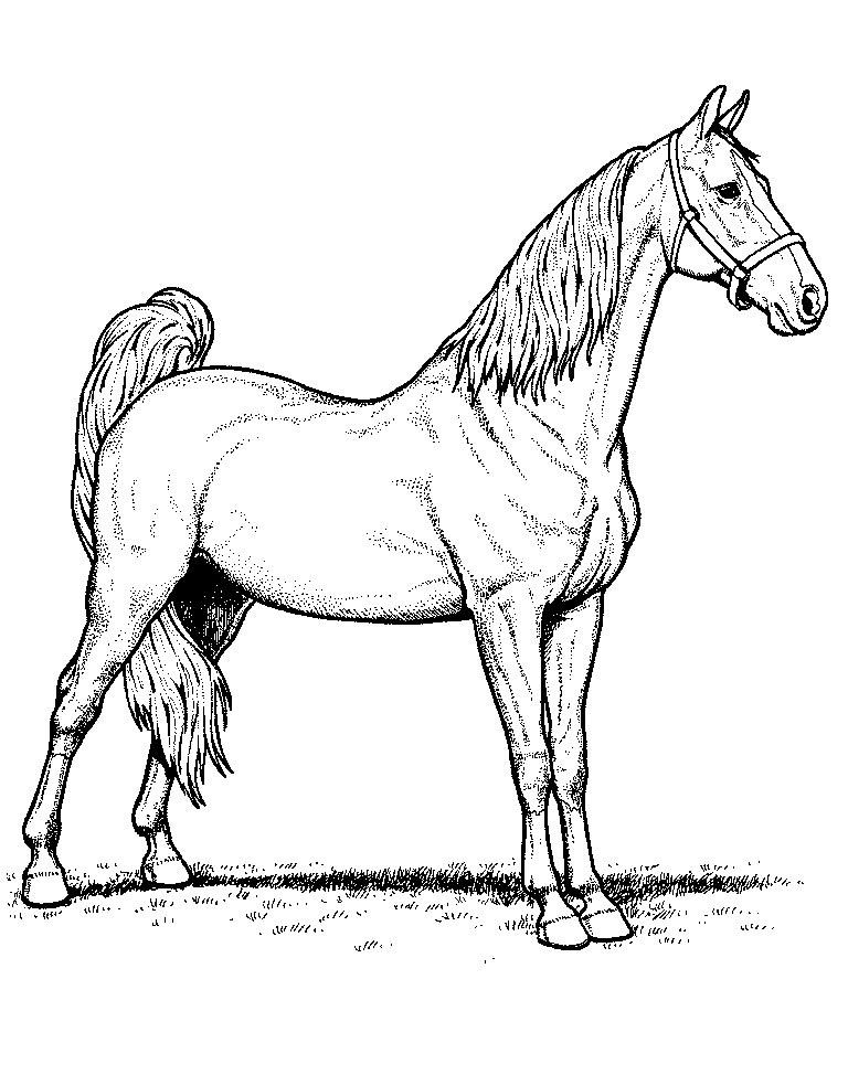 Рисунки лошадей для раскраски 011