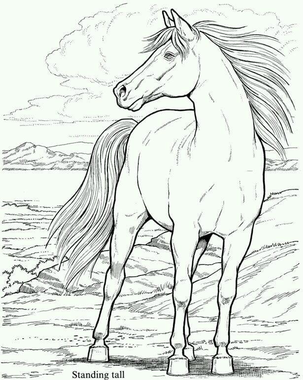 Рисунки лошадей для раскраски 016