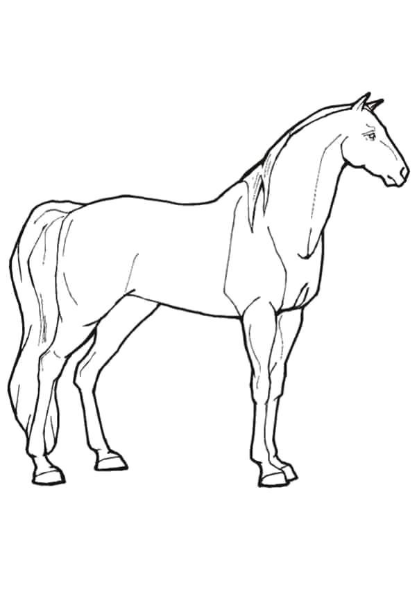 Рисунки лошадей для раскраски 019